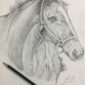 Realistic Horse Sketch Art by Sana Afzal